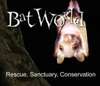 Bat World Sanctuary
