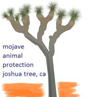 Mojave Animal Protection